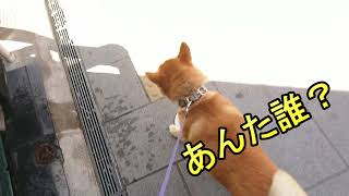 ソラマメタロウさんと小江戸に行ってみた。 thumbnail
