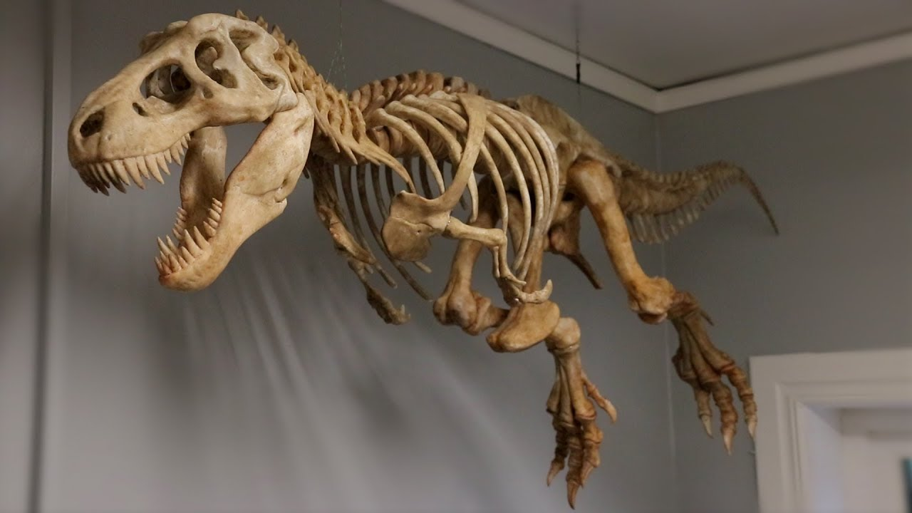 BIG 3D Printed T-Rex Skeleton
