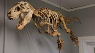 BIG 3D Printed T-Rex Skeleton