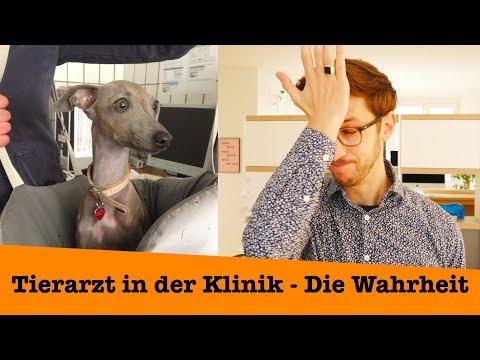 Tierarzt In Der Klinik - Die Wahrheit über Arbeitsbedingungen Und Gehalt