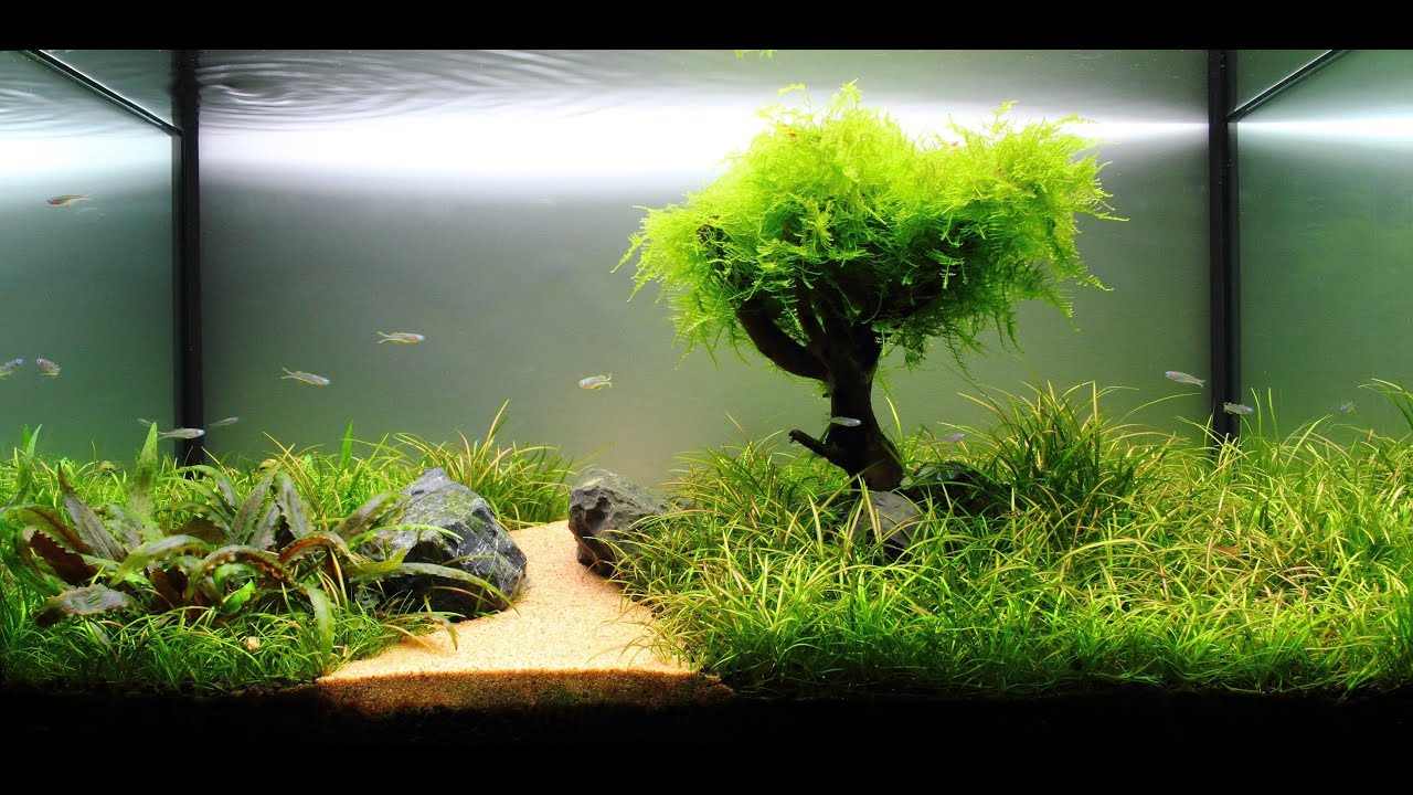 Freshwater planted aquarium fragments of memories for Planted tank fish