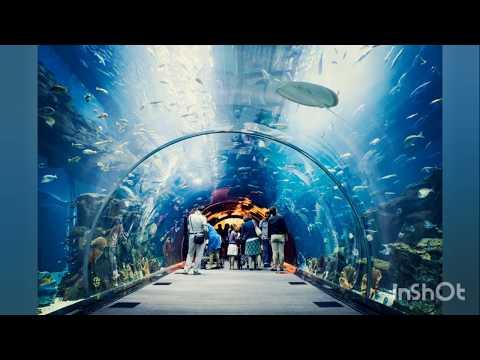 Dubai Mall Aquarium and Underwater Zoo 2020 Special