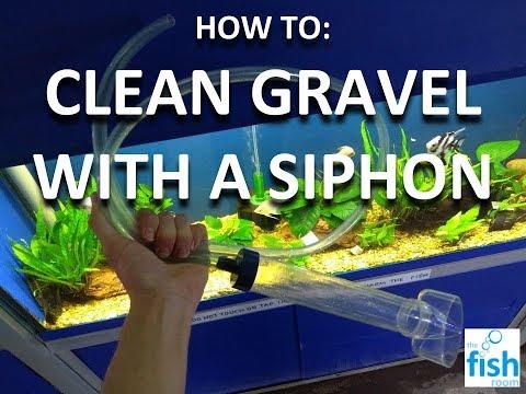 GRAVEL SIPHON: How To Clean Aquarium Gravel
