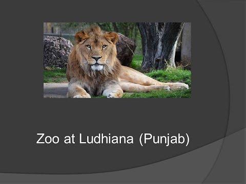 Zoo  At Ludhiana punjab 480p