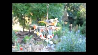 Songbird Essentials Copper Birdfeeder Product Line