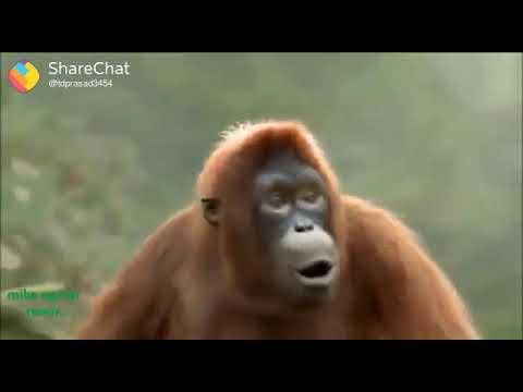 Monkey Mama Ek Peg La Dance Movie Paisa Vasool