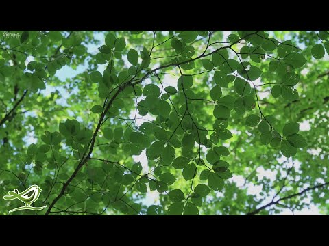 """beautiful-relaxing-music:-""""sunny-days""""-by-peder-b.-helland-(official-video)"""
