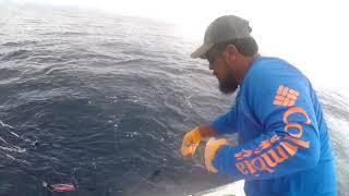 2018 Offshore World Championship | Tonga Int'l Billfish Tournament | Pacific Sailfish