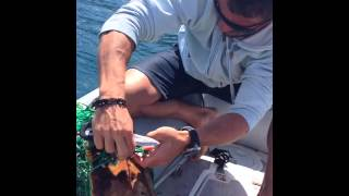 Rescate tortuga boba en La Isleta, Gran Canaria.