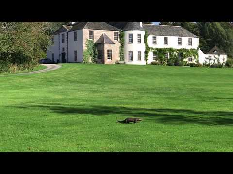 Otters at Logie Country House