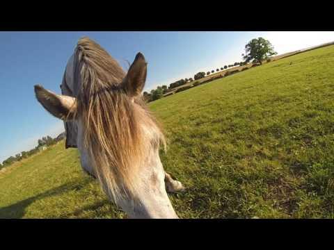 Ulan, Calinda & Galador - Un soir parmi les poneys