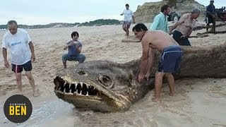 7 Criaturas Marinas Más Feas Que Existen