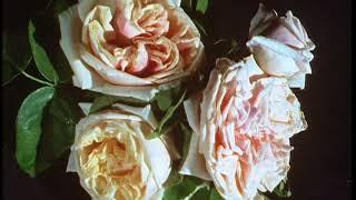 Скачать The Victorian Flower Garden Episode 3