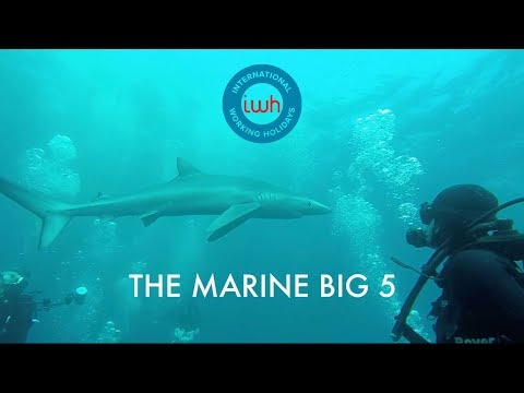 The Marine Big 5 Project | Shark Diving in South Africa