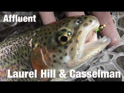 WB - Fly Fishing Affluent, Laurel Hill Creek & Casselman River, PA & MD - March '18