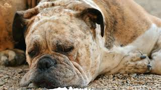 8hours Sleep and relax Music For Dogs, Cats & All Pets, Stress Relief, Anxiety Healing Music 0051 thumbnail