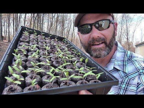 SEEDLINGS HAVE SPROUTED…SO WHAT'S NEXT?? GARDENING AND PLANTING TIPS/TRICKS FOR SUCCESS! JI