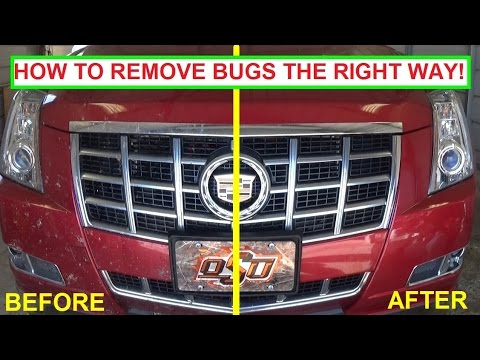 Best Product To Remove Bugs And Tar From Car