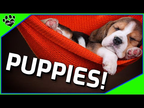 10 Puppy Facts You Didn't Know