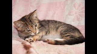 Возьмите котенка в дар в Москве