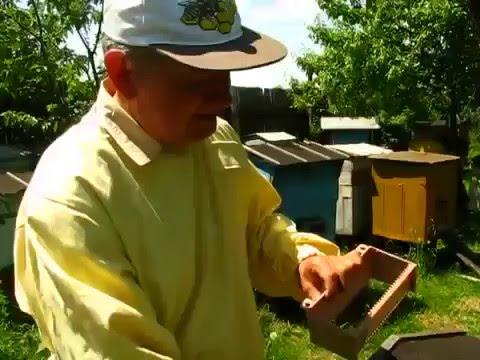 Цветочная пыльца. Мед и продукты пчеловодства -