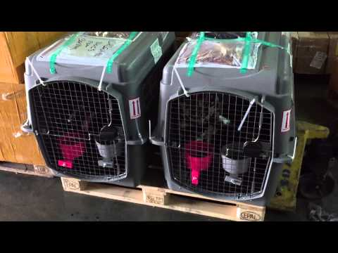 You Can See For Yourself The Mistreatment Of Pets By Delta Cargo And Turkish Customs In Istanbul