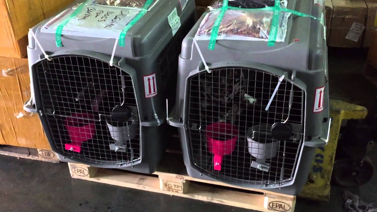 You Can See For Yourself The Mistreatment Of Pets By Delta Cargo And Turkish Customs In Istanbul Youtube