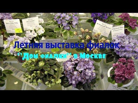 видео: Выставка фиалок в Москве Дом фиалки  02/06/2018