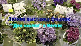 Выставка фиалок в Москве Дом фиалки  02/06/2018
