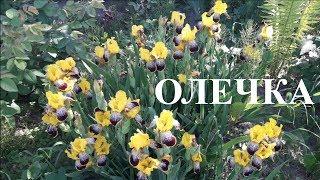 Cover images С Днем Рождения Ольга,С Днем Рождения Оля!