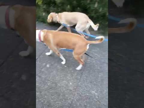 🐕 dog walk