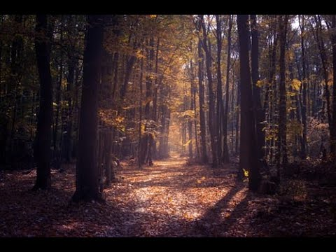 Relaxation. A Forest Walk