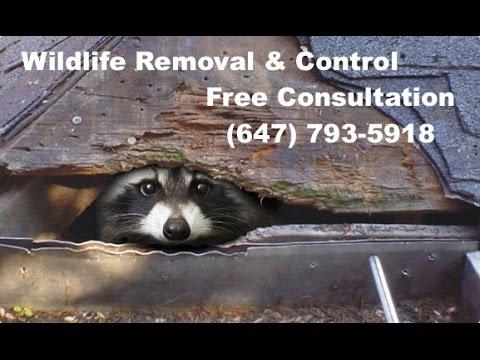 Animal Control Service in Toronto GTA