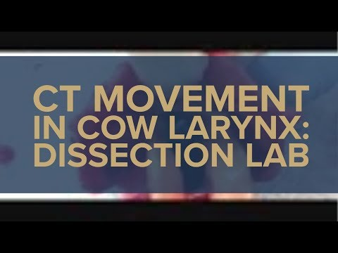 CT Movement in Cow Larynx