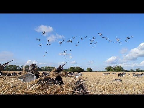 Early Goose Hunting North Dakota 2019 (Hunter Harassment!)