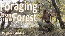 Foraging Texas WINTER  -Survival Food from the Forest-