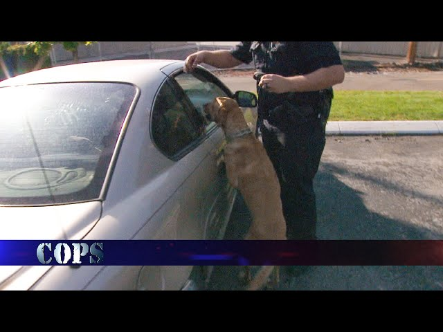 Those Aren't My Car, Web Exclusive, COPS TV SHOW