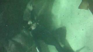 Acqua Mundo, pegando carona com o tubarão