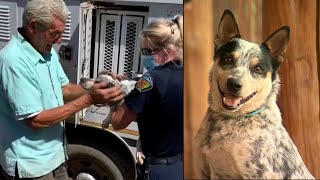 Dog Back With His Human After Chasing Coyote Into Wildfire