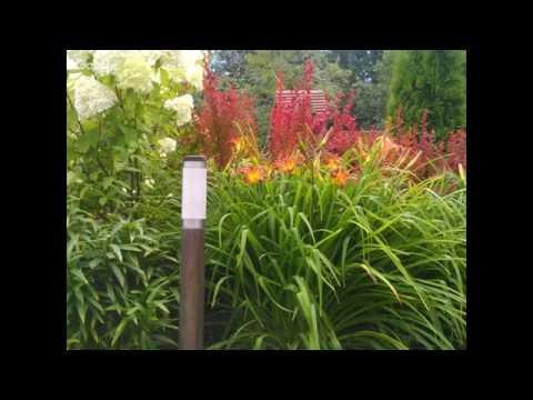 Многолетние растения для городских цветников