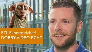 RTL-Experte sicher: DOBBY-VIDEO echt!