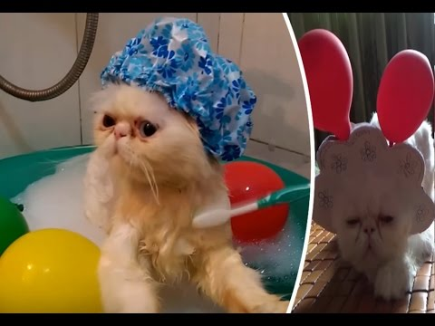 Best Funny Cats Compilation 2017 | Funny Cat Vines 2017 | Meo Cover Home
