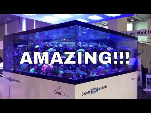 Best tank at Interzoo! DeJong marine life