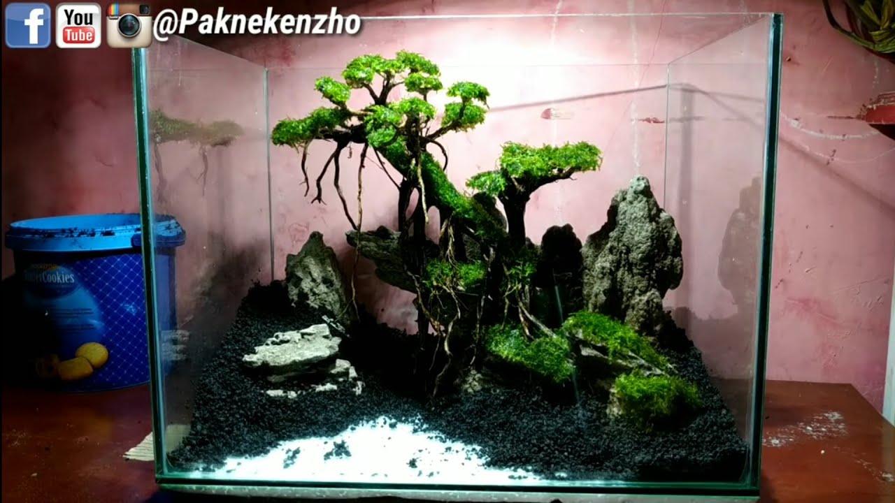 61 Cara Setting Bonsai Aquascape Di Aquarium Youtube