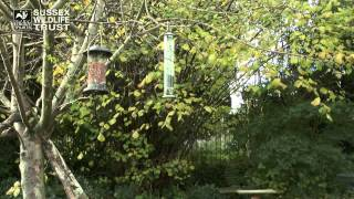 Bird Feeding Tips: Cleaning And Locations Of Feeders