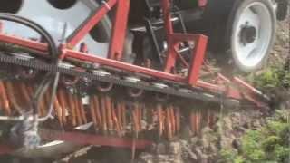 Perfekcyjne ustawienie kombajnu = bezproblemowe kopanie marchewki z uszkodzoną nacią
