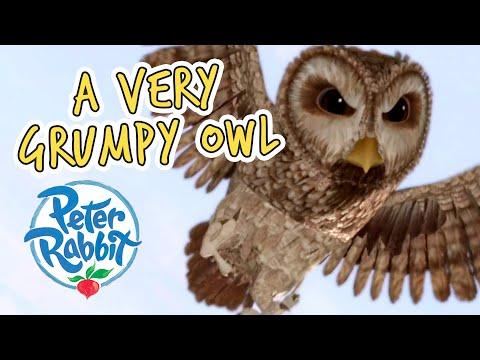 #Summer ☀️ Peter Rabbit - A Very Grumpy Owl   Cartoons for Kids
