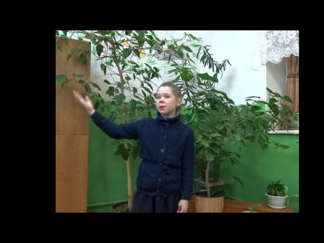 Изображение предпросмотра прочтения – ДарьяСмирнова читает произведение «Дары Терека» М.Ю.Лермонтова