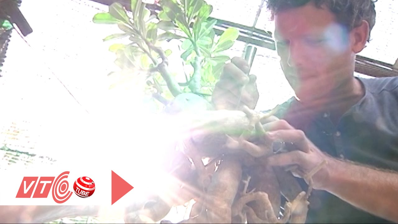 Chàng Tây học cách tạo thế cho cây hoa sứ | VTC