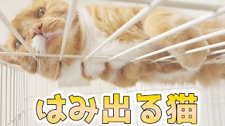 cute cat relaxing on the cage